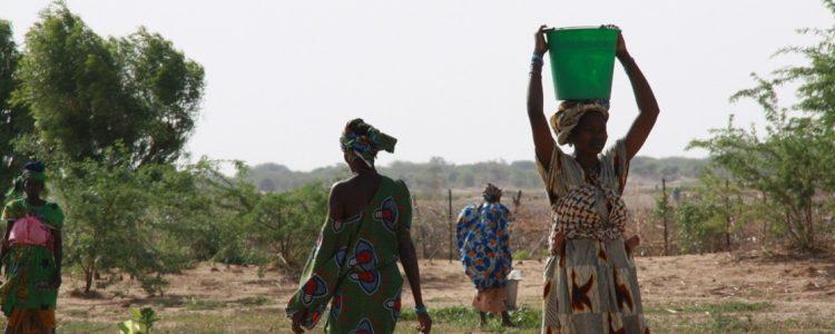Mujeres en los huertos de producción de Mali © CIDEAL